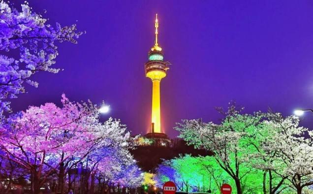 Cherry Blossom N Seoul Tower Cr. Myeong-dong.org.jpg