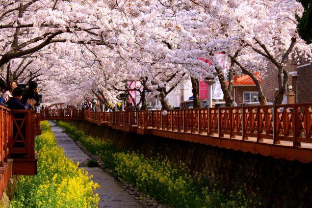 Jinhae Romance Bridge Cr. Klook.jpg
