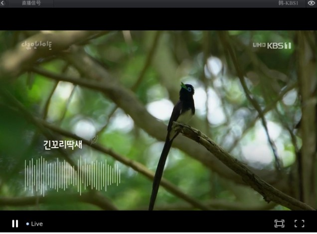 2019 10 3 Jung Il woo in Wild Map Documentary. Episode 1.11
