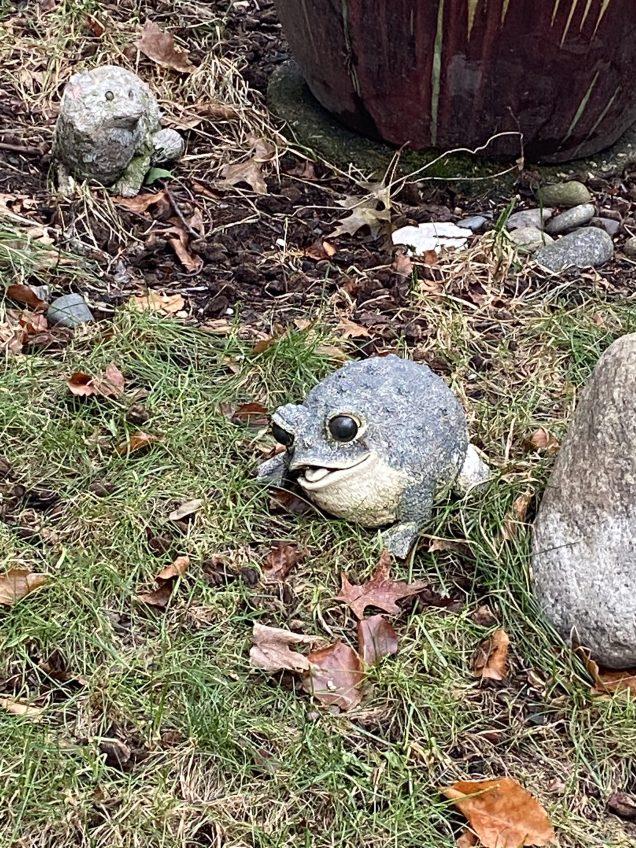 2019 12 31 2 JIW's Fan 13 Frog Encounter