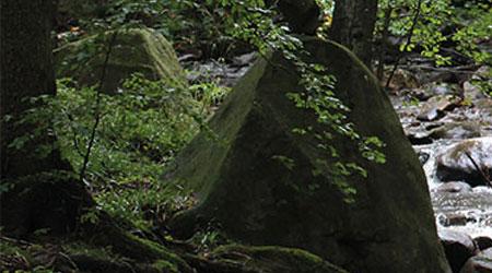 Harz Beratung 1
