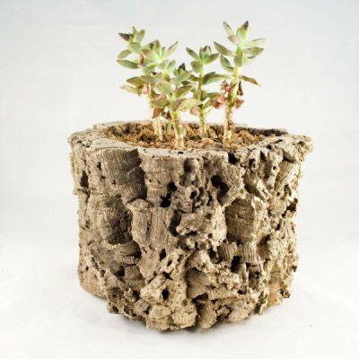 Cork Tube Planter
