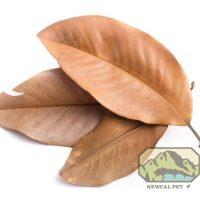 NewCal Magnolia Leaves 10 pack