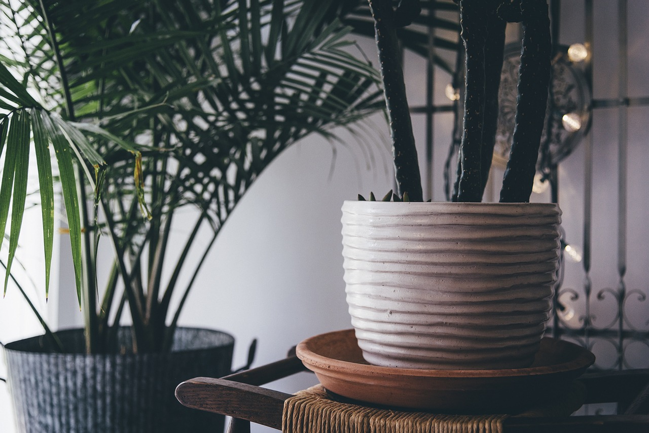 9 Trendy Houseplants That Dont Need Direct Sunlight