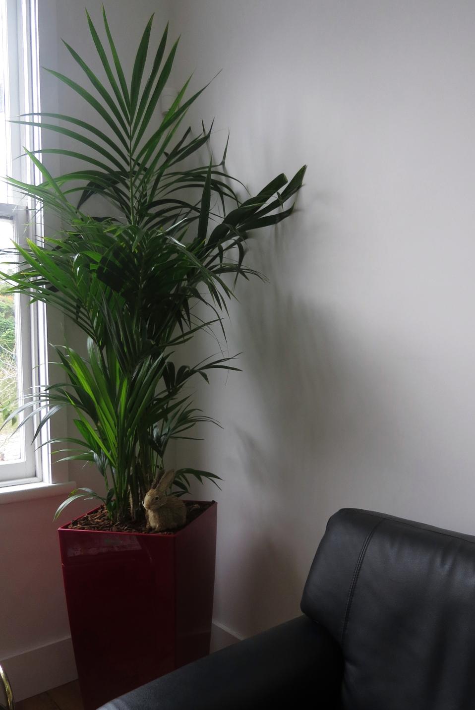 Lily Flower Leaf Green