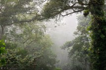 Perhaps it is the oldest rainforest in the world