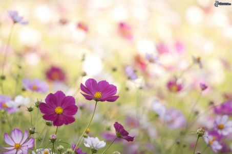 fioletowe-kwiaty,-polne-kwiaty-207524
