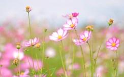 summer-freshness-tenderness-beauty-flowers-flower-flowers-flowers-flower-petal-petals