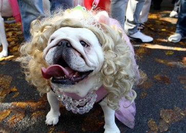 the-most-ridiculous-outfits-dogs-have-suffered-through-26