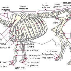Dog Bone Diagram How To Apply Eyeshadow Our Bones Do Not Splinter Or Crack Junkyard Cow Description