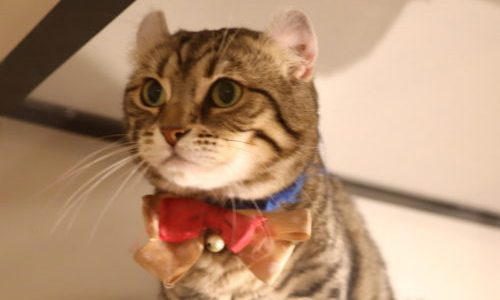 猫好きは要チェック!丸の内『カフェ シャトンルージュ』こだわりの大人カフェ!