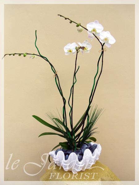 Orchid Plant Arrangements  Juno Beach Flowers  5616278118