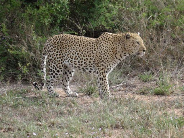Como planejar um safári no Kruger, o maior parque da África do Sul