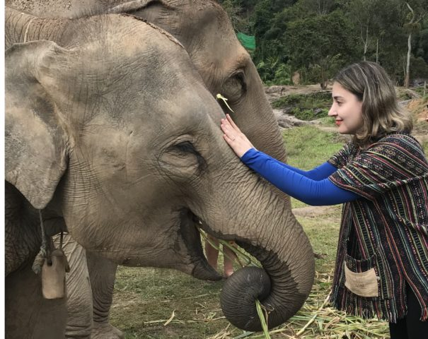 """Turismo responsável com elefantes no """"Elephant Jungle Sanctuary"""" em Chiang Mai (Tailândia)"""