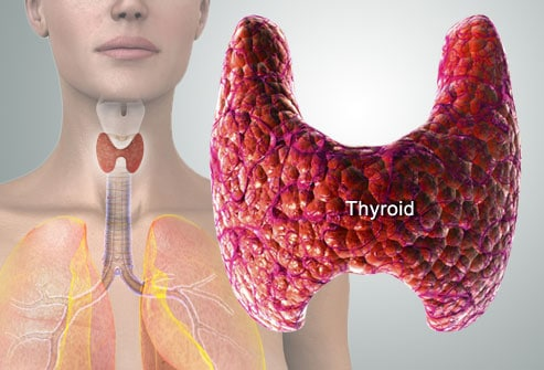 photo of thyroid diagram - 9 (Nine) Hormones That Lead to Weight Gain and Ways To Avoid It