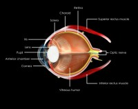 The Roles of Brain and the Eye – How They Work Together