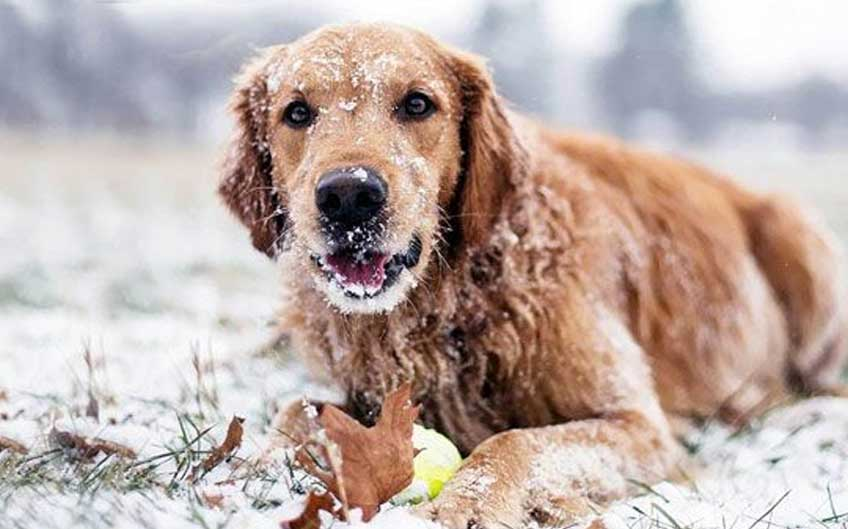 Protect your dog in winter