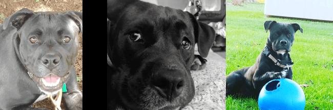 our pitbull enjoying the dog days of summer