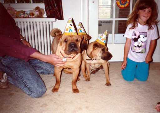 dogs help with depression. Chinese Shar-Pei dogs wearing Birthday hats