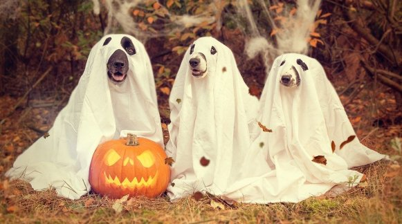 Dogs in a sheet ghost costume
