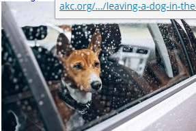 Dog-left-in-a-car