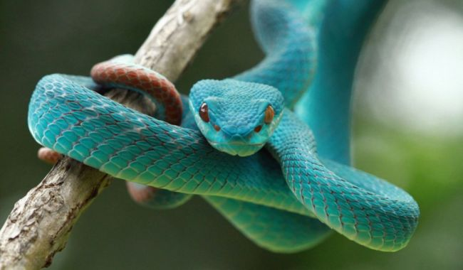 3,000 species of snake