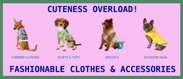 Cute dog fashion