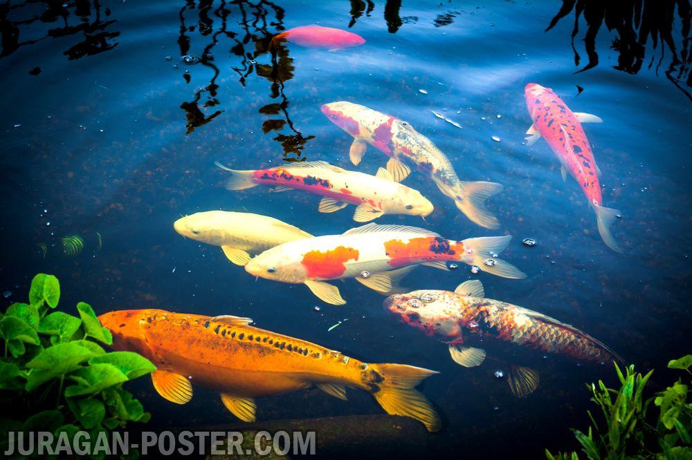Fish  Jual Poster di Juragan Poster