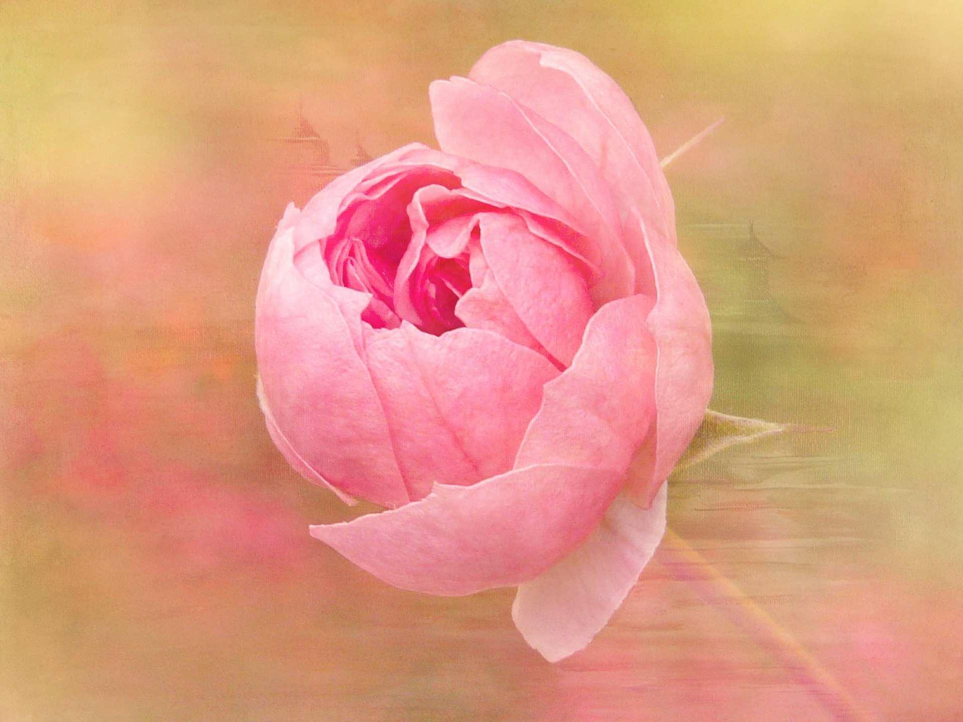 Contoh Lukisan Bunga Mawar Indah  Jual Poster di Juragan