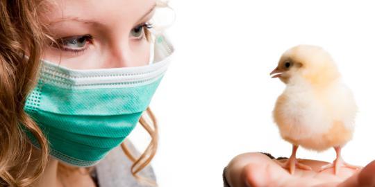 Info: Cara pencegahan penyebaran virus flu burung   Juragan Info