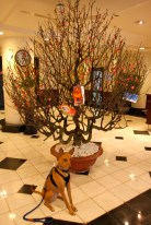 Tala in our lobby with an enormous peach tree