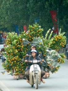 Some motorbikes have been customized to fit three trees!