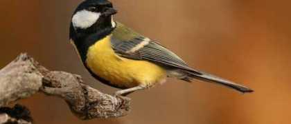 Criação amadora de pássaros tem por fim preservação das espécies