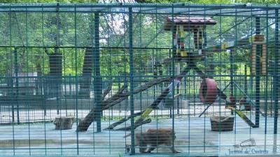 Maimuta Benji din Parcul Nicolae Romanescu a murit 1