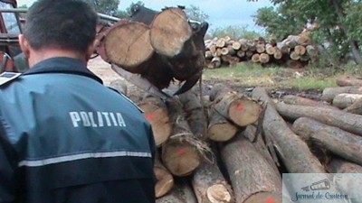 Dolj : Cercetati penal pentru furt de lemne 1