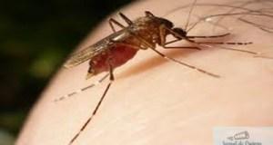 Trei locuitori din Craiova infestati cu virusul West Nile ! 3