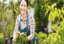 5 sfaturi pentru gradina perfecta