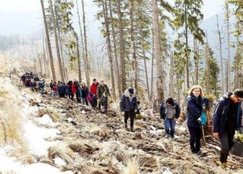 Zece hectare reîmpădurite în Făgăraş 13