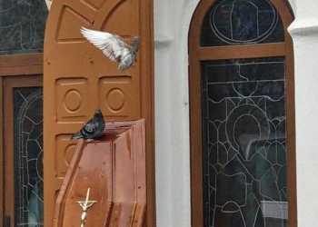Doi porumbei s-au așezat azi pe sicriu, la înmormântarea judecătorului Marius Dumitrescu 15