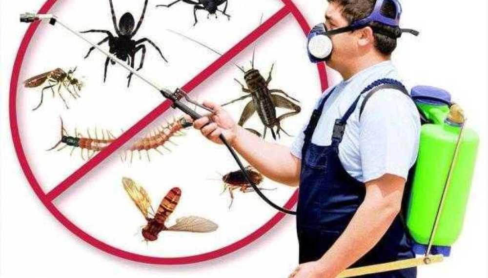 Noi acțiuni de dezinsecție, dezinfecție și deratizare, la Mioveni 1