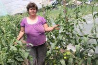 """Elena Șerban și soțul său, Lică, sunt cultivatori de tomate """"bio"""""""