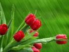 Ploaia si florile