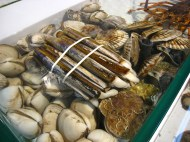Razor clams selected for our table; Lei Yue Mun