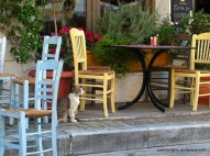 Cat; Nikitas, Athens, Greece