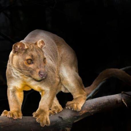 10 удивительных животных, которые похожи на представителей другой планеты