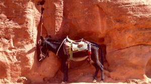 Alleine reisen Jordanien