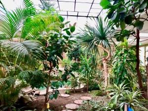 Ceaușescu Haus Indoor Wintergarten Bukarest Tipp