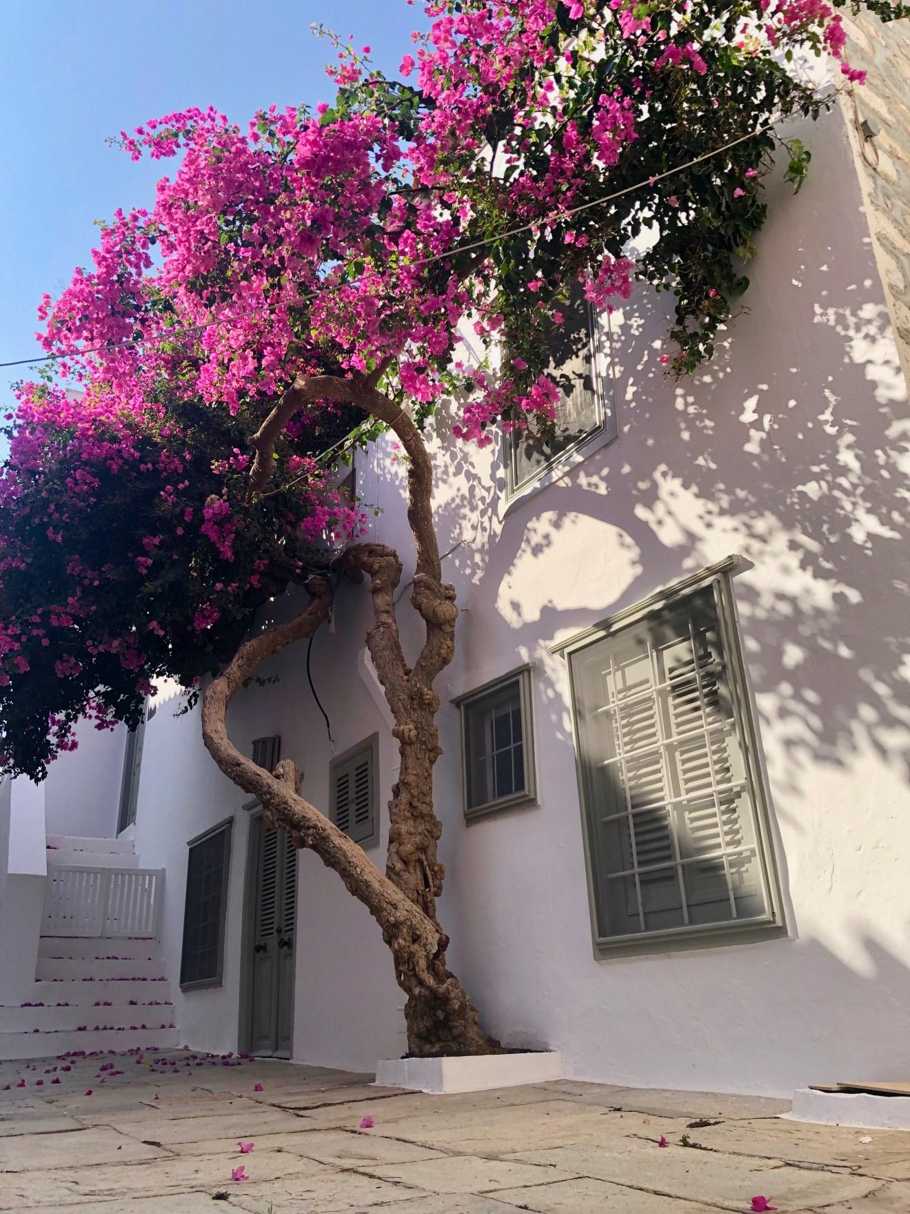 Hydra Tipps Griechenland Pflanze