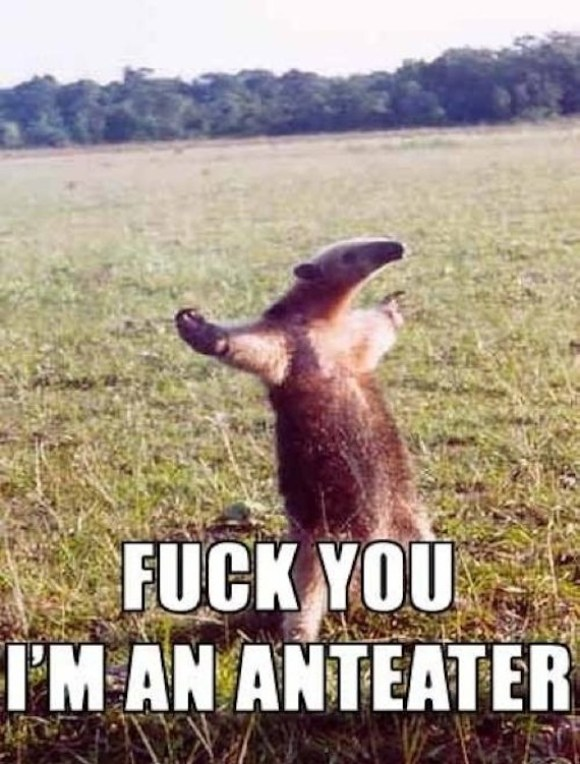 Double-Hard Anteater