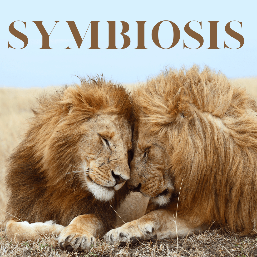 symbiosis resources for middle schoolers